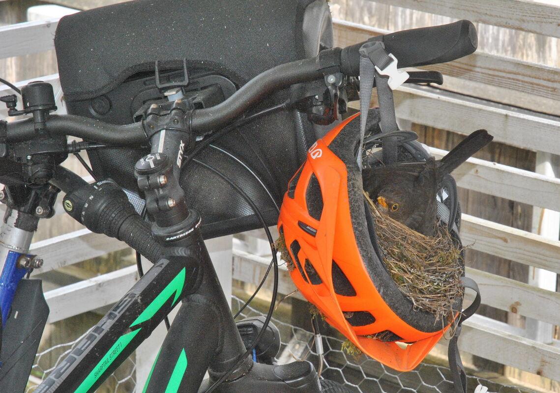 Radfahren in Stuttgart: Helme ja, Helmpflicht nein eine